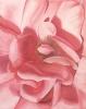 Rose - 40x50 cm