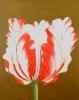 Tulpe - 100x80cm